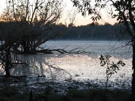 Dawn at the Billabong